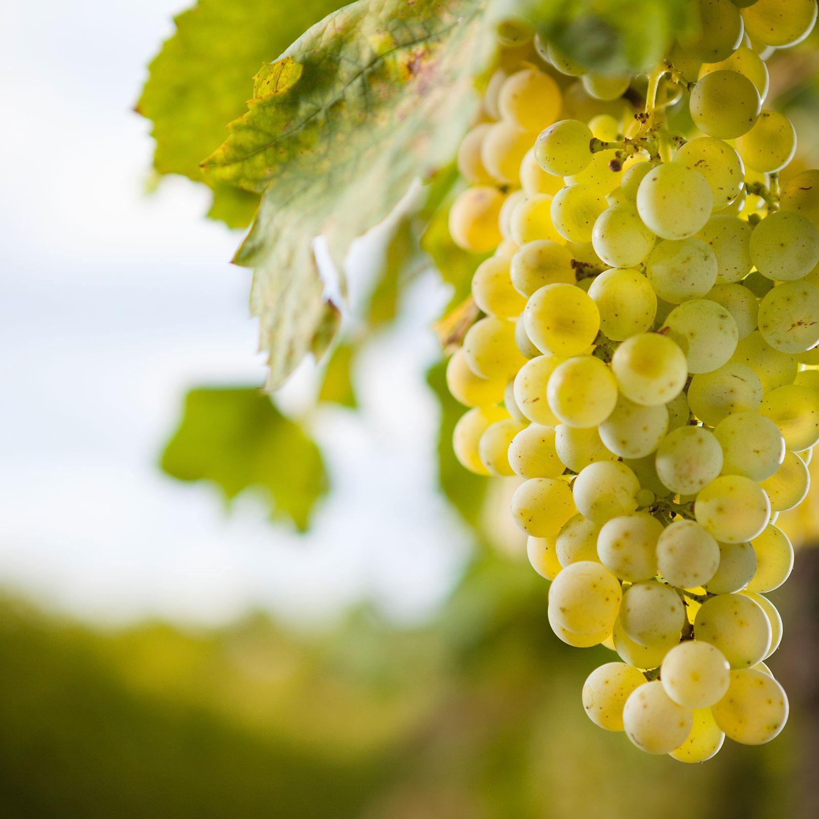 wines_1